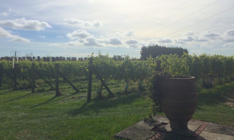 eglantine-vineyard-3