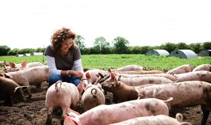 redhill-farm-free-range-pork-1