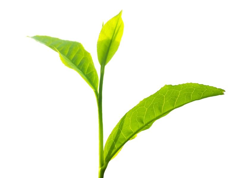 Blog Loose Leaf Musings By Tea Box Great Food Club